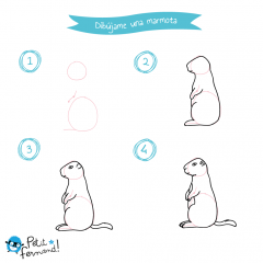 Dibujar una marmota
