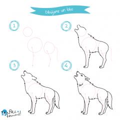 dibujar un lobo